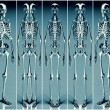 Stock Photo: Five Silver Blue Alien Skeleton