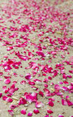 Rose petals laying at the ground — Stock Photo
