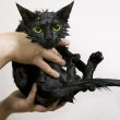 Cute black soggy cat after a bath — Stock Photo #25940181