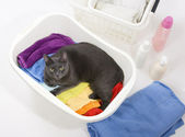 Cat in white plastic basket with colorful laundry to wash — Stock Photo