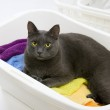 Funny cat wash - cat in white plastic basket with colorful laund — Stock Photo #29642929