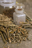 Dry herbals, different medicinal herbs - Willow bark medical — Stock Photo