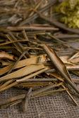 Willow bark medical — Stockfoto