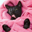 Cute black soggy cat licking after a bath, funny little demon — Stockfoto #50860415