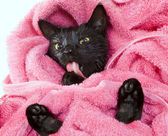 Cute black soggy cat licking after a bath, funny little demon — Stock Photo