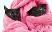 Two Cute black soggy cats after a bath — Zdjęcie stockowe