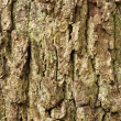Tree bark. — Stock Photo