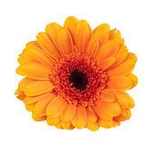 çiçeği — Stok fotoğraf