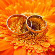Two gold wedding rings on a background orange gerbera — Zdjęcie stockowe