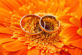 Two gold wedding rings on a background orange gerbera — Stock Photo