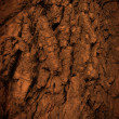 Tree bark texture — Stock Photo #23201630