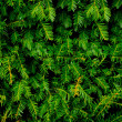 Background of Christmas tree branches — Stock Photo