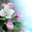 Spring border or background with pink blossom 1 — Stock Photo #47251059