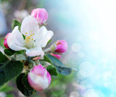 Spring border or background with pink blossom 1 — Stock Photo