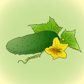 Cucumber. — Stock Vector
