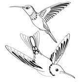 Vector birds in black and white — Stock Vector