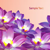 Vector floral background with violet lotuses — Stock Vector