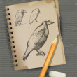 Royalty-Free Stock ベクターイメージ: Drawing of raven, pencil, eraser.