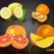 Set of citrus fruits. — Stock Vector