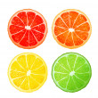 Stock Vector: Citrus fruits