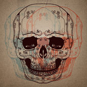 Skull study drawing. Pencil on paper. — Vector de stock