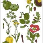 Set of fruits and seeds isolated on white. Vector illustration of apple, sunflower, seeds, oak, acorn, nut, hazelnut, mustard, poppy, pumpkin, cucumber — Stock Vector