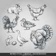 Set of domestic animals cock, hen, turkey, rabbit, duck, goose. Vector illustration — Stock Vector