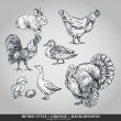 Set of domestic animals cock, hen, turkey, rabbit, duck, goose. Vector illustration — Stock vektor