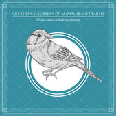 Great encyclopedia of animal planet earth, vintage birds illustration — Stok Vektör