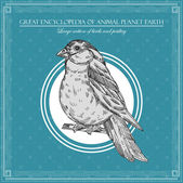 Great encyclopedia of animal planet earth, vintage birds illustration — Cтоковый вектор
