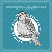 ビンテージ鳥図、動物の惑星地球の偉大な百科事典 — ストックベクタ