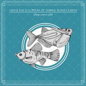 Great encyclopedia of animal planet earth, vintage fishes illustration — Stock Vector