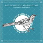 Stor encyklopedi av djur planetjorden, vintage fågel illustration — Stockvektor