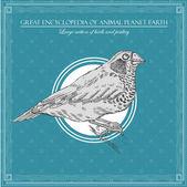 Grote encyclopedie van de dierlijke planeet aarde, vintage vogel illustratie — Stockvector