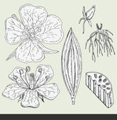Flower vector illustration — Stock Vector