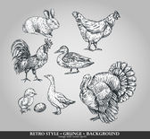Set of domestic animals cock, hen, turkey, rabbit, duck, goose. Vector illustration — Vector de stock