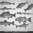 Set of sea fishes. Retro style vector illustration — Stok Vektör