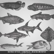 Set of sea fishes. Retro style vector illustration — Stock vektor