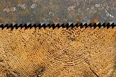 ツリー — ストック写真
