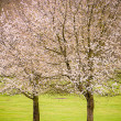 Spring blossom trees — Stock Photo #24931003