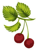 Cherry — Stock Vector