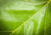 Pretty leaf — Stock Photo