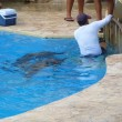 Dolphinarium in Cancun, Mexico (Dolphinaris) — Stock Photo