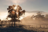 Sunrise In The Yarra Valley In Winter — Stock Photo