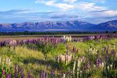 New Zealand Scenery — Stock Photo