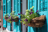 New Orleans Flowers — Stock Photo