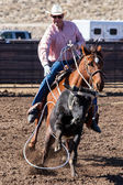 Team Roping in Wickenburg — Stock Photo