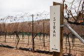 Syrah Grapes Signage — Stock Photo