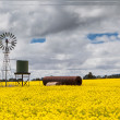 CanolFields Near Smeaton — Stock Photo #32810185