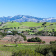 Santa Barbara Wine Area — Stock Photo